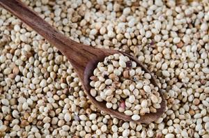 Is millet gluten free